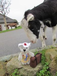 Holly und die Ziege