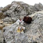 Holly auf dem Monte Baldo