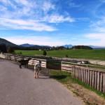Freilaufende Ziegen
