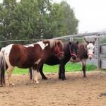 Pony & Esel