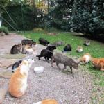 beim Katzenhaus