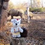 Holly und die Nashornfamilie