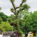 bizarrer Baum